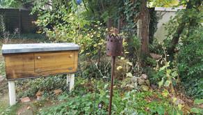Bienen im Herbst