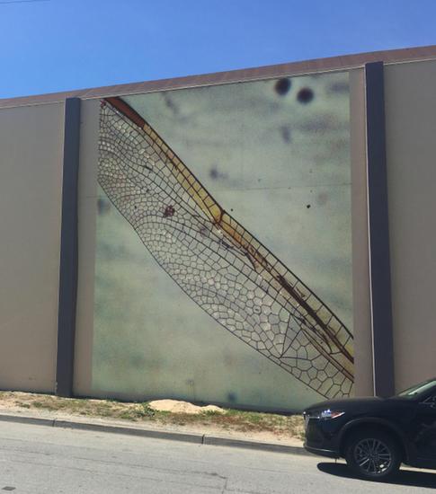 Ala de Libelula, SandCity, CA