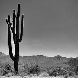 Saguaro Silhouette.jpg