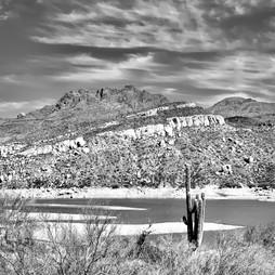 Bartlet Saguaro.jpg