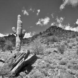 Saguaro & Pyramid.jpg