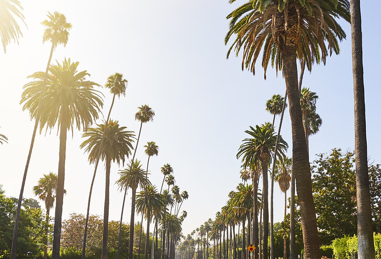 Palm Trees cascading down residential st