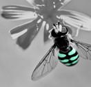 Bee Smart.jpg