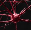 nerve-cell-2213009_1920 (1).jpg