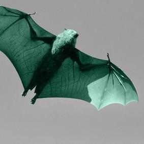 As Blind as a Bat.jpg