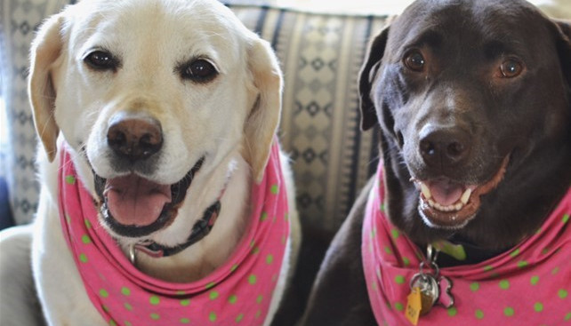 Bailey and Izzy (Owned by Becca)