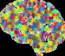 brain-2750453_1280.png