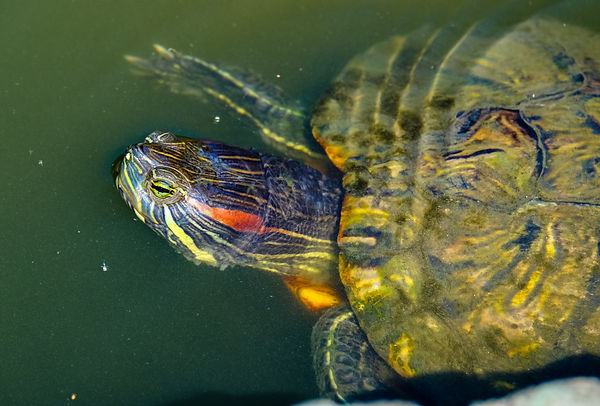 animal-aquatic-macro-photography-96933.j