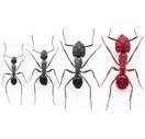 Carpenter Ant.jpg