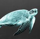 Turtley Awesome.jpg