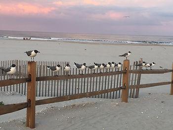 Sea Gulls on beach fence.jpf.jpg