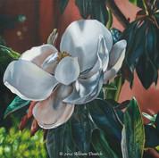 """""""Magnolia"""""""