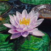 """""""Waterlily"""""""