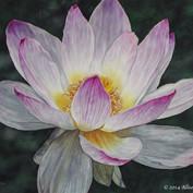 """""""Lotus"""""""