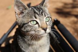 One of the many pretty kitties at Botshabelo