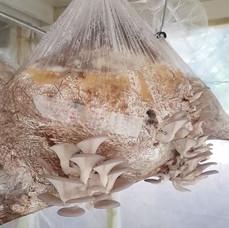 Botshabelo Mushroom Project
