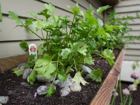 12 Old Fence Boards + 12 Baby Plants + a Sunday Afternoon = 1 Recycled Wood Herb Garden