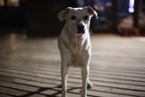 Sweet lady Diana. One of Botshabelo's oldest resident doggos.