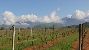 Shaloshvili's wine cellar -   גן העדן בעמק  אלזני
