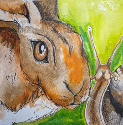 Hare and Snail