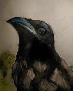 The Black Crow King