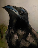 Rook. Watercolour and ink.