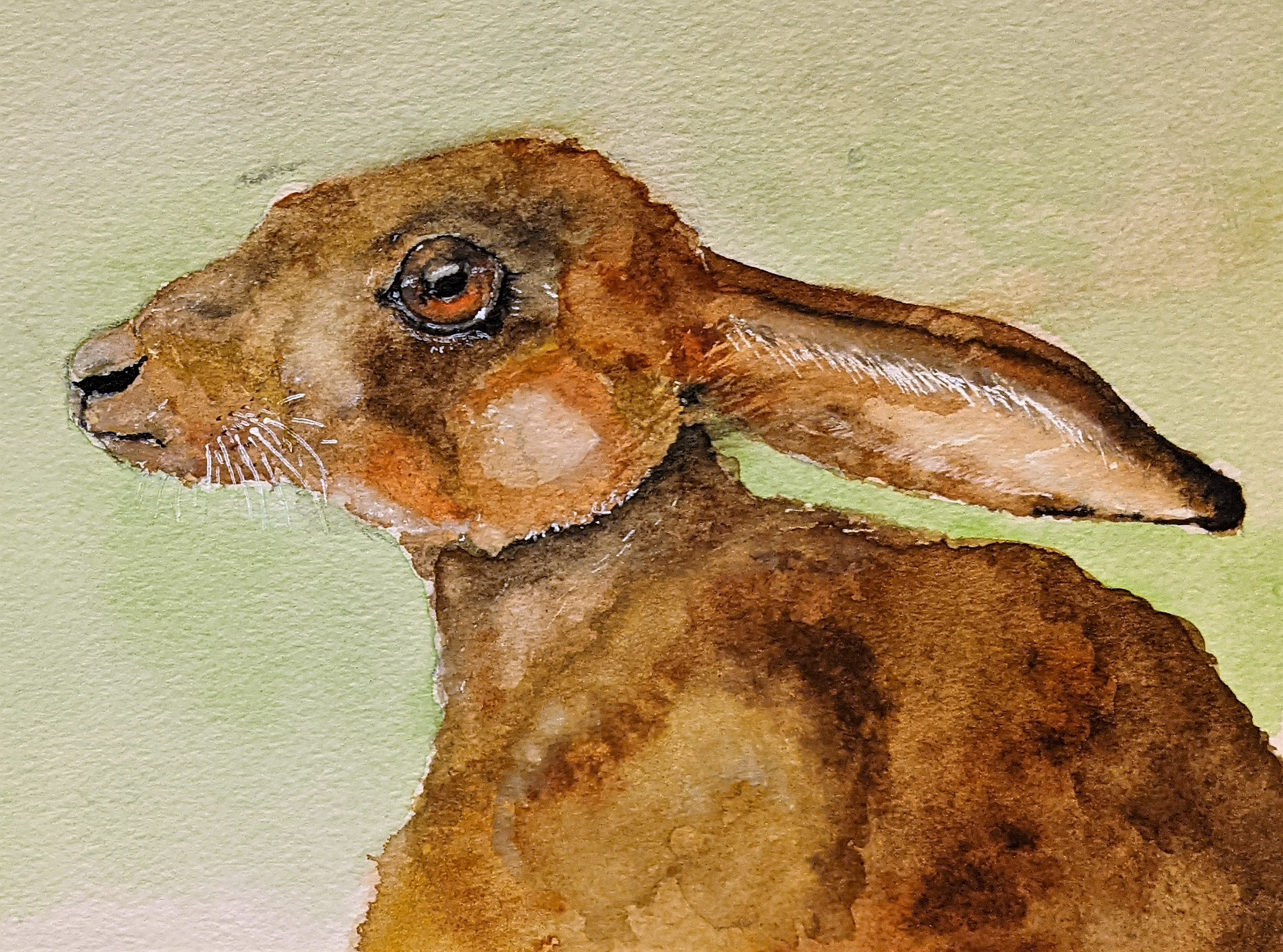 Hartley the Hare