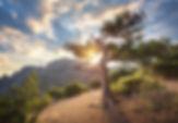 summer-landscape-with-old-tree-P4DWEJZ.j