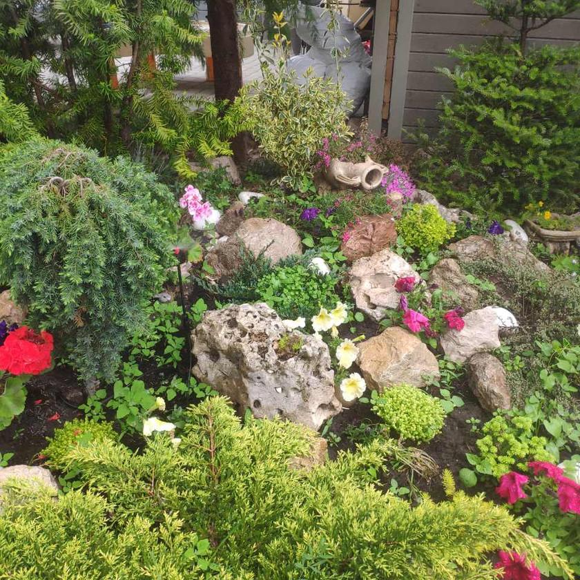 Посадка цветов Совиньон