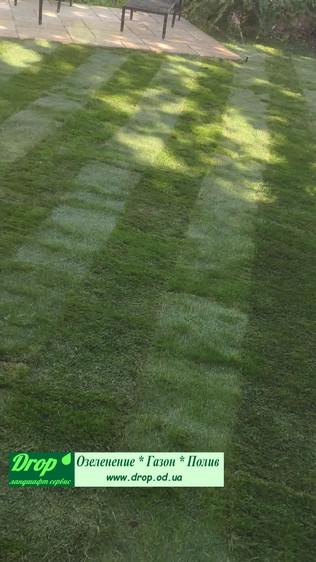 замена газона на новый рулонный газон Одесса