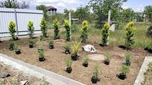 растановка и высадка растений в Одессе