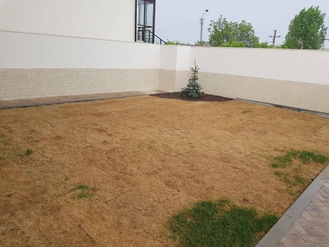 Рулонный газон без автополива