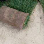Укладання і підрізування рулонів газону на ділянці