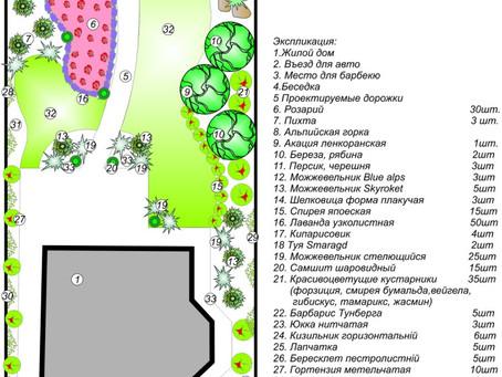 Озеленение в Одессе. Развитие участка на протяжении 5 лет.