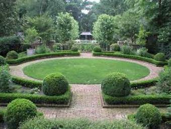 создание зеленой изгороди