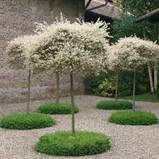 композиционная посадка растений