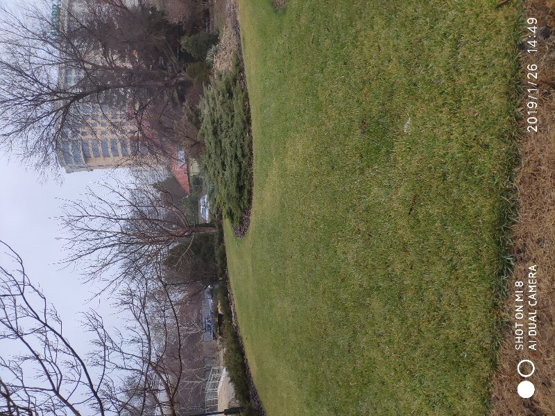 Зима рулонный газон. Одесса