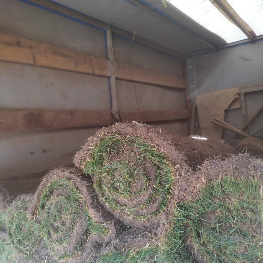 Продажа рулонного газона в Одессе доставка