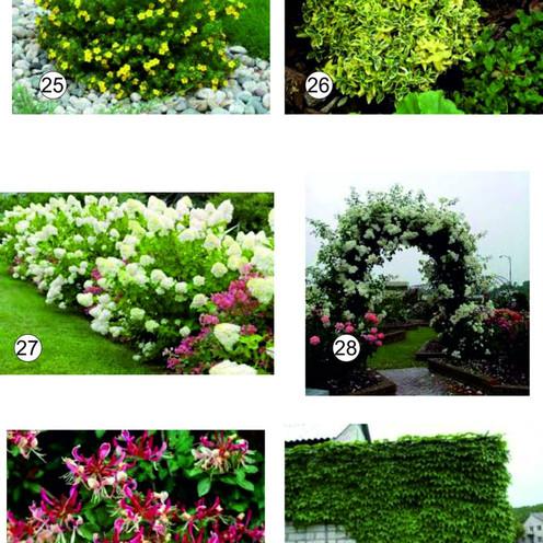 Подбор растений для Ландшафтных работ