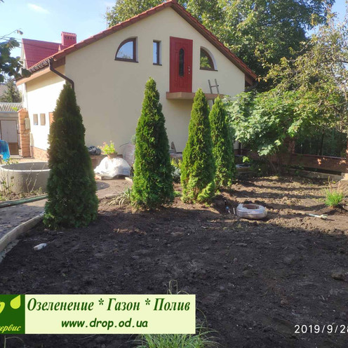 создание живой изгороди из туи в Одессе