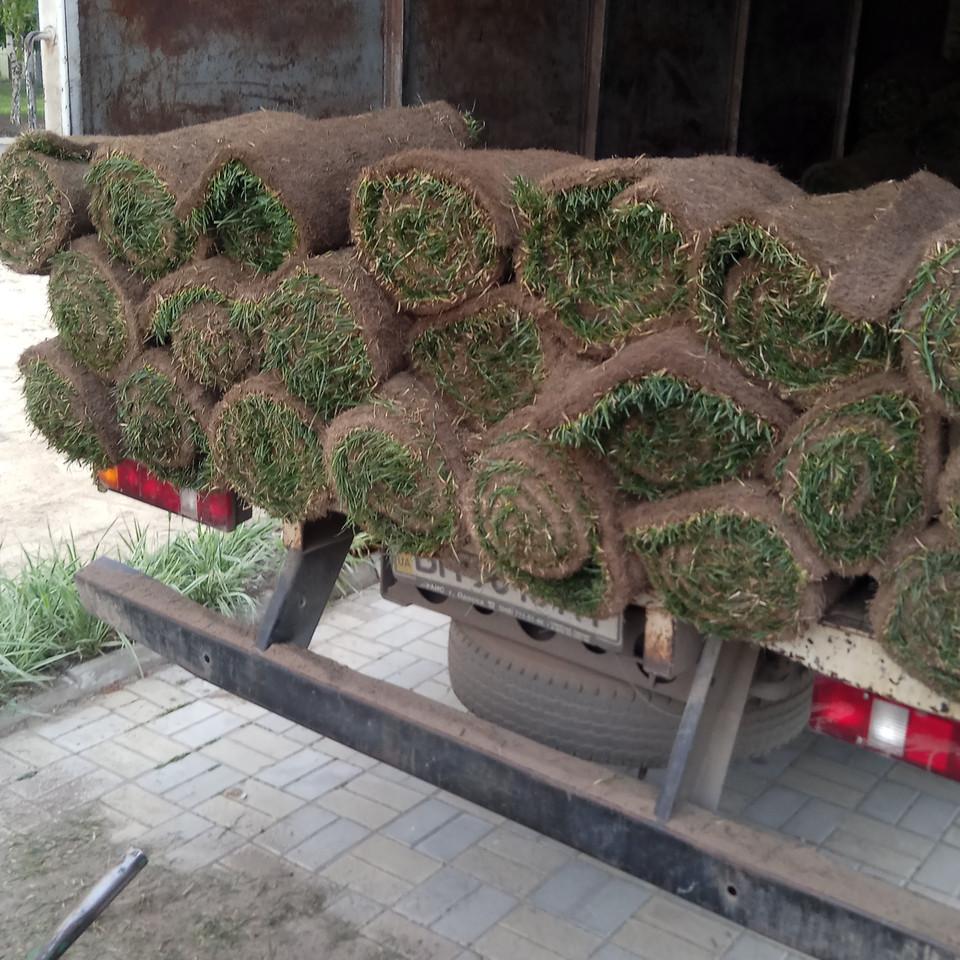 Продажа рулонного газона в Одесса