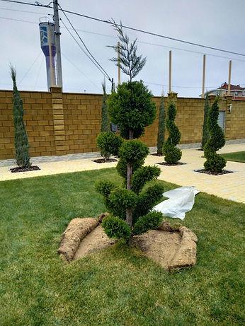 посадить растения Одесса