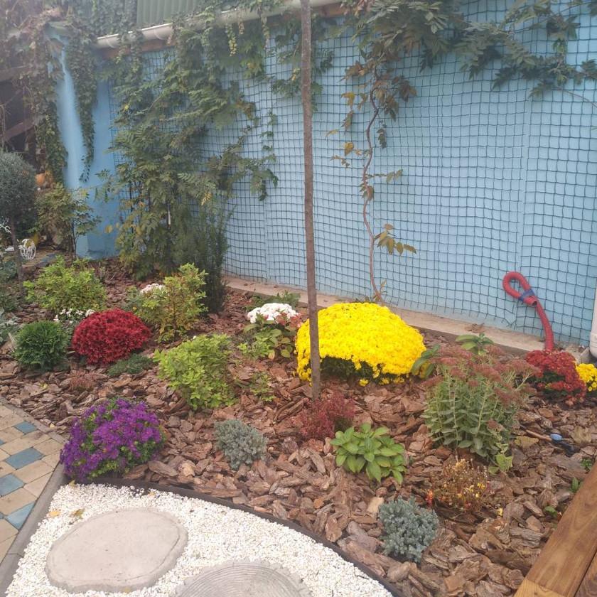 Сад непрерывного цветения в Одессе