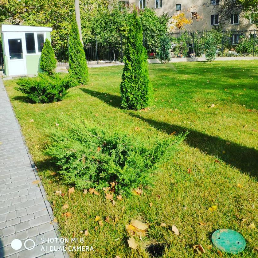 Озеленение территории детского сада в Одессе