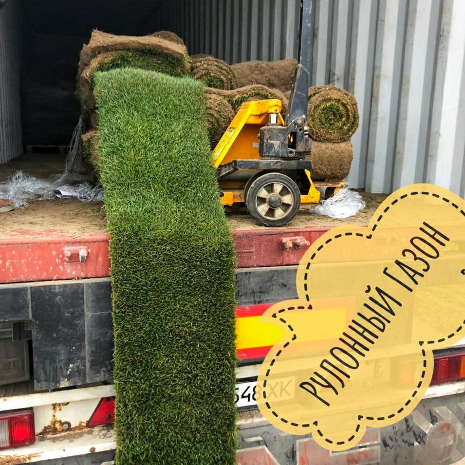 Продажа рулонного газона