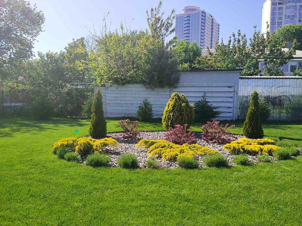 декоративная клумба в газоне из хвойников и цветущих кустарников