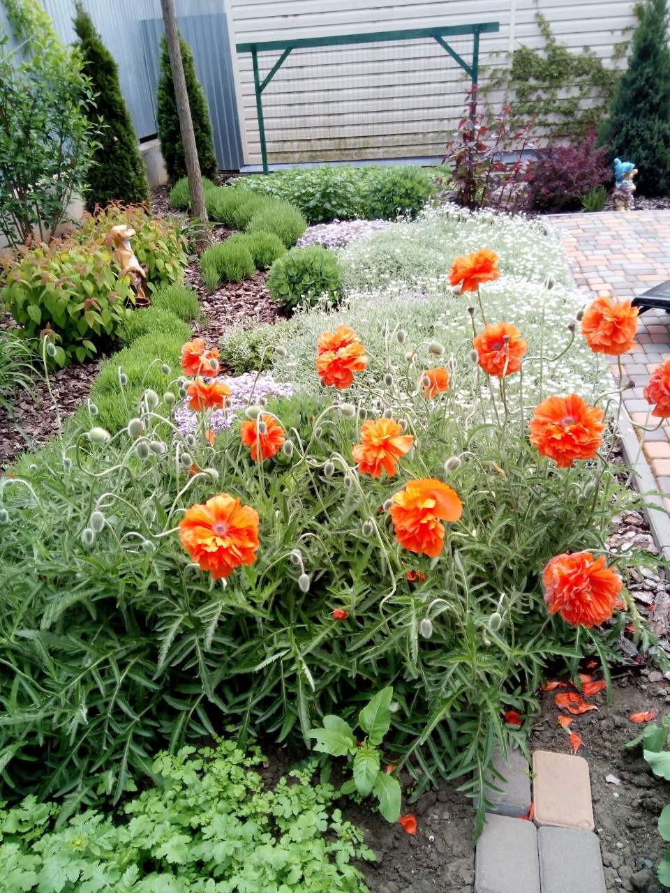 Почвопокровные растения вместо газона в Одессе