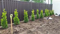 создание фона участка посаженными растениями