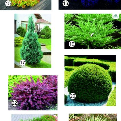 Растения для озеленения территории в Одессе