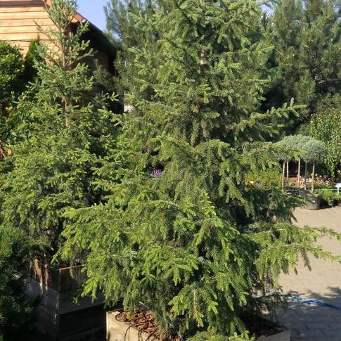 Висадка хвойніков в Одесі